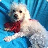 Adopt A Pet :: MERLIN - Irvine, CA