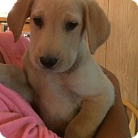 Adopt A Pet :: Tori - Homer, NY
