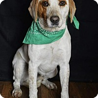 Adopt A Pet :: Roscoe - Pardeeville, WI