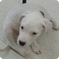 Adopt A Pet :: Casper - Staunton, VA