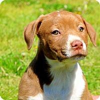 Adopt A Pet :: Phoenix~adopted! - Glastonbury, CT
