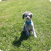 Adopt A Pet :: Casey Beatty - Urbana, OH