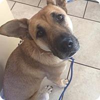 Adopt A Pet :: Josie - Greeneville, TN