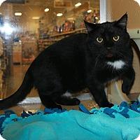 Adopt A Pet :: Nelson - Rochester, MN