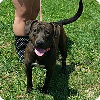 Adopt A Pet :: King - Lisbon, OH