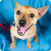 Adopt A Pet :: Devin - Minneapolis, MN