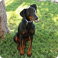 Adopt A Pet :: Brennan - Fort Worth, TX