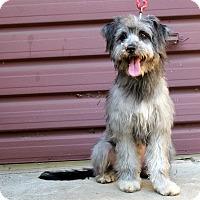 Adopt A Pet :: Gadget - Los Angeles, CA