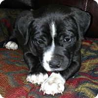 Adopt A Pet :: Trae - Hartford, CT