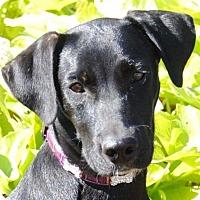 Adopt A Pet :: Dakota - Cedartown, GA