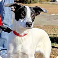 Adopt A Pet :: Rosetta Stone~adopted! - Glastonbury, CT