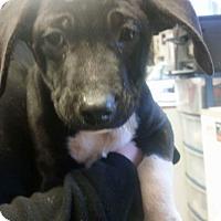 Adopt A Pet :: Aubrey - Patterson, NY