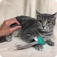 Adopt A Pet :: Bloom - Lombard, IL