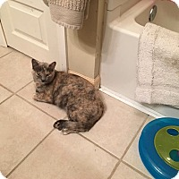 Adopt A Pet :: Luna - Loveland, CO