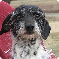Adopt A Pet :: Pete - Greenville, RI