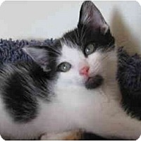 Adopt A Pet :: Foster - Modesto, CA