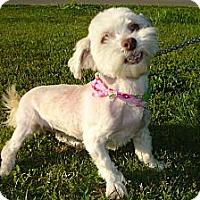 Adopt A Pet :: LACY - ROCKMART, GA