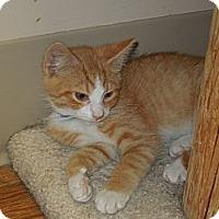 Adopt A Pet :: Cream - Medina, OH