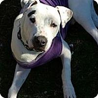 Adopt A Pet :: Brian - Phoenix, AZ