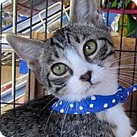 Adopt A Pet :: Norman - Seminole, FL