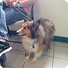 Adopt A Pet :: Dunkin