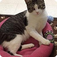 Adopt A Pet :: Lenny - Byron Center, MI
