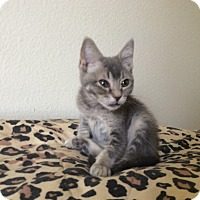 Adopt A Pet :: Smokey - Scottsdale, AZ