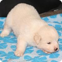 Adopt A Pet :: Caspar - Huntsville, AL