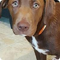 Adopt A Pet :: Webster (Green Eyes) - Newark, DE