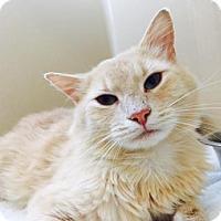 Adopt A Pet :: Shane - Lincolnton, NC