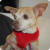 Adopt A Pet :: Cindy - Brooklyn, NY