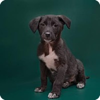 Adopt A Pet :: Cooper - Brooklyn, NY
