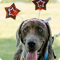 Adopt A Pet :: Bo - Greenwood, SC