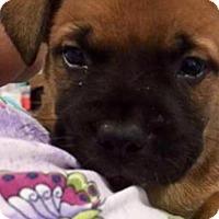 Adopt A Pet :: Swoosh - Barnegat, NJ