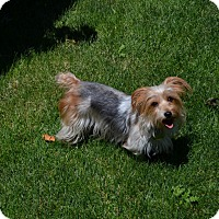 Adopt A Pet :: Shelby - Boise, ID