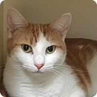 Adopt A Pet :: Gideon - Salisbury, MA