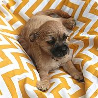 Adopt A Pet :: Taco Bell - Woonsocket, RI