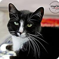 Adopt A Pet :: Sunlight - Lyons, NY