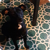 Adopt A Pet :: Lillian - Austin, TX