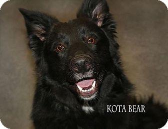 Border Collie Mix Dog for adoption in Idaho Falls, Idaho - Kota Bear