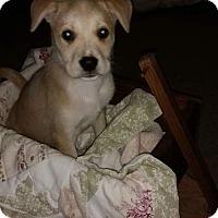 Adopt A Pet :: Lolli - Tomah, WI