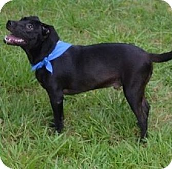 Labrador Retriever Mix Dog for adoption in Manchester, New Hampshire - Sam J