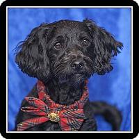 Adopt A Pet :: Elsa - San Diego, CA