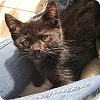 Adopt A Pet :: Liam - Covington, KY