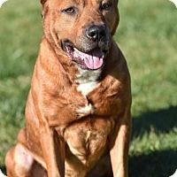 Adopt A Pet :: Ranger - Breinigsville, PA