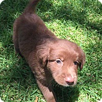 Adopt A Pet :: Riley - Mesquite, TX