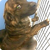 Adopt A Pet :: Mason - Boulder, CO