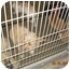 Photo 3 - Golden Retriever Dog for adoption in Harbor City, California - Lancaster Dogs
