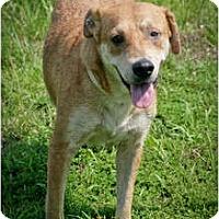 Adopt A Pet :: Catie - Meridian, MS