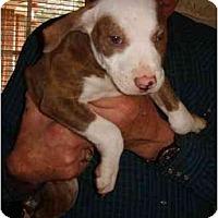 Adopt A Pet :: Jeremy - Whitehouse, TX